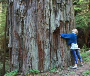 Redwood treehugger