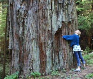 Redwood treehugger