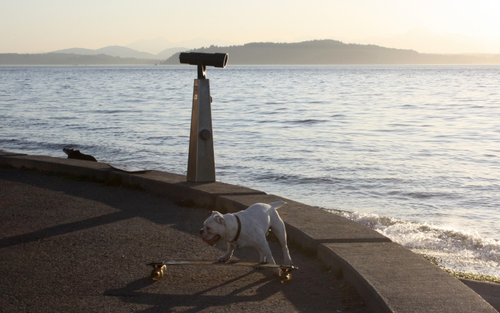 Skateboarding bulldogs at Alki Beach