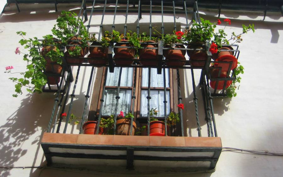 Quick green glances: Sevilla residents make use of every space to enjoy a bit of green...