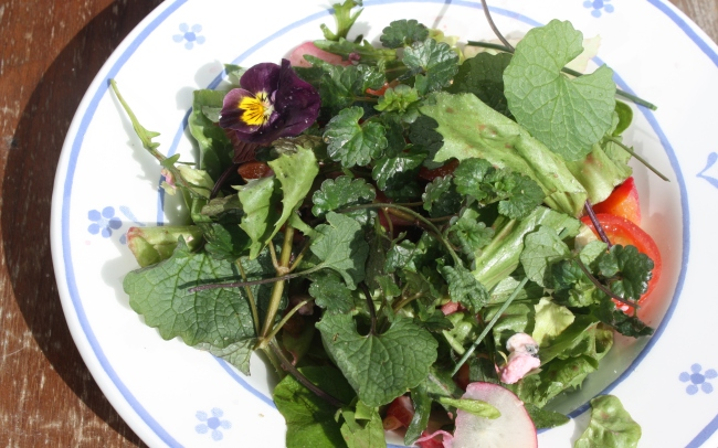 Returning home: sprucing up my salad with some balcony flowers and freshly harvested wild herbs!