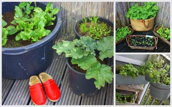 Rooftop gardening (2)