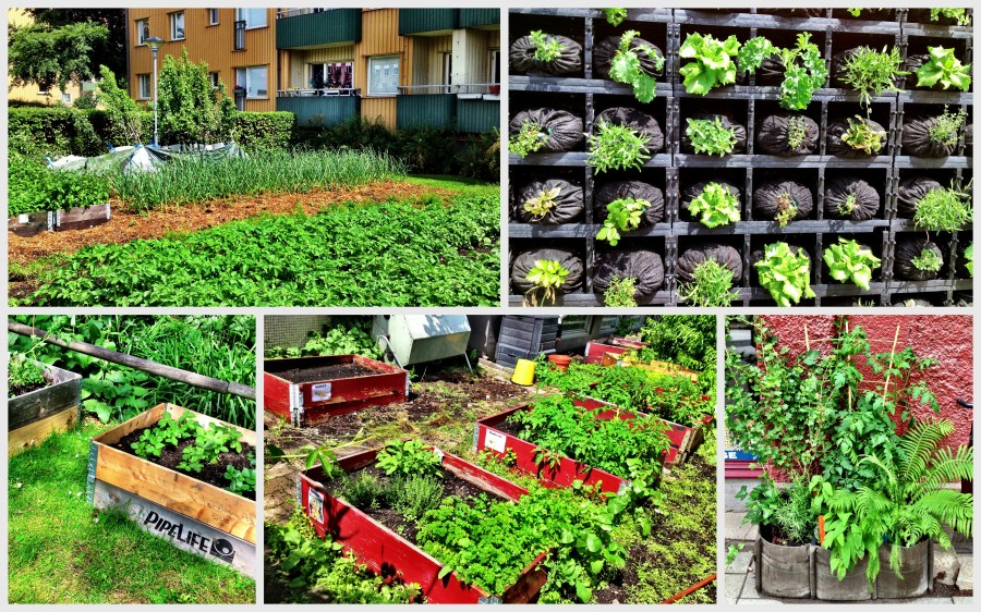 Malmö: urban agricultural initiatives are popping up all over the city