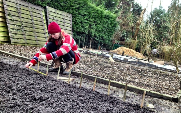 Permaculture Bed: measuring to see where to plant the fava beans and spinach