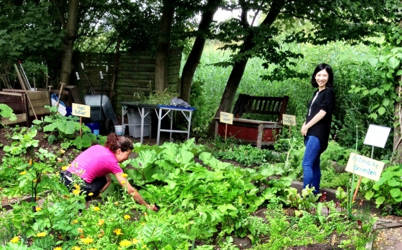 Comparing notes: urban agriculture in the Netherlands and China (June 2013)