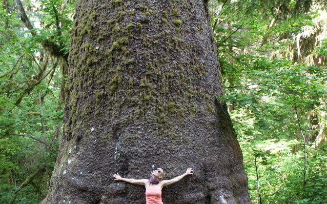 Tree wonder: Olympic National Rain Forest
