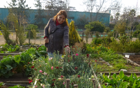 Urban agriculture project in Santiago, Chile (Credit: Maria Contesse)